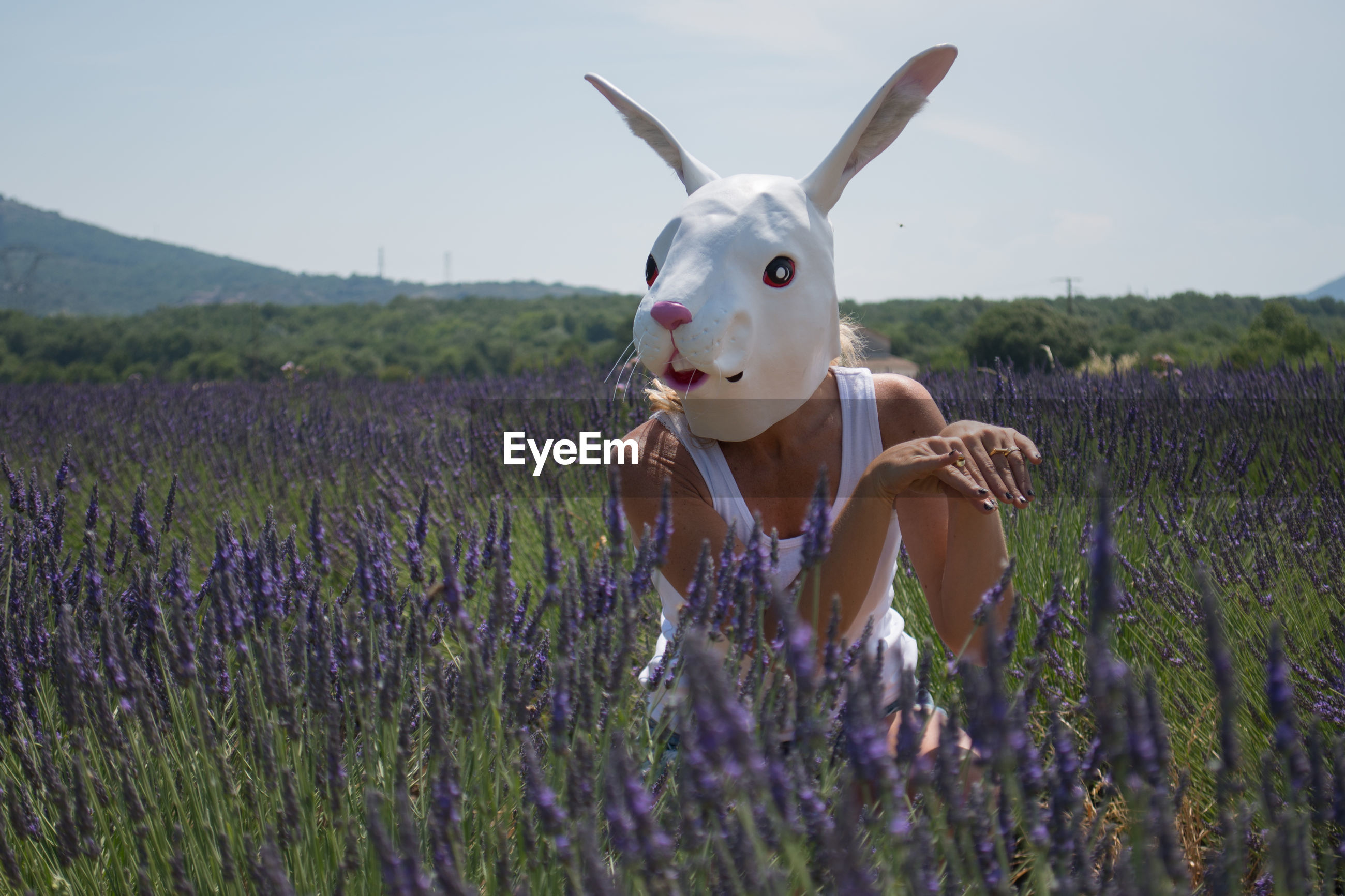 Woman wearing rabbit mask by blooming lavenders