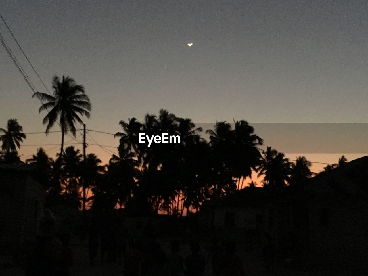 tree, moon, silhouette, palm tree, nature, night, scenics, sky, no people, beauty in nature, sunset, tranquility, tranquil scene, growth, clear sky, outdoors, astronomy