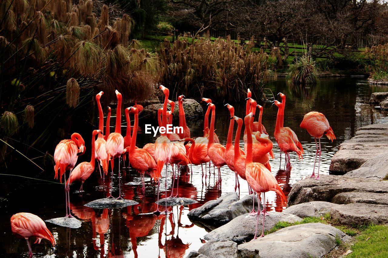 water, lake, vertebrate, flamingo, group of animals, animals in the wild, no people, nature, animal, bird, animal themes, large group of animals, animal wildlife, day, beauty in nature, plant, rock, pink color, reflection, outdoors, animal neck, freshwater bird, flock of birds