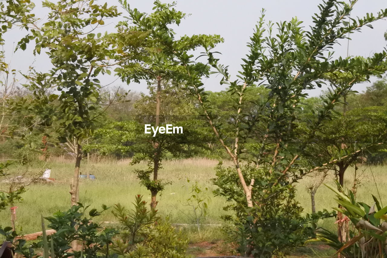 growth, tree, nature, no people, plant, outdoors, beauty in nature, day