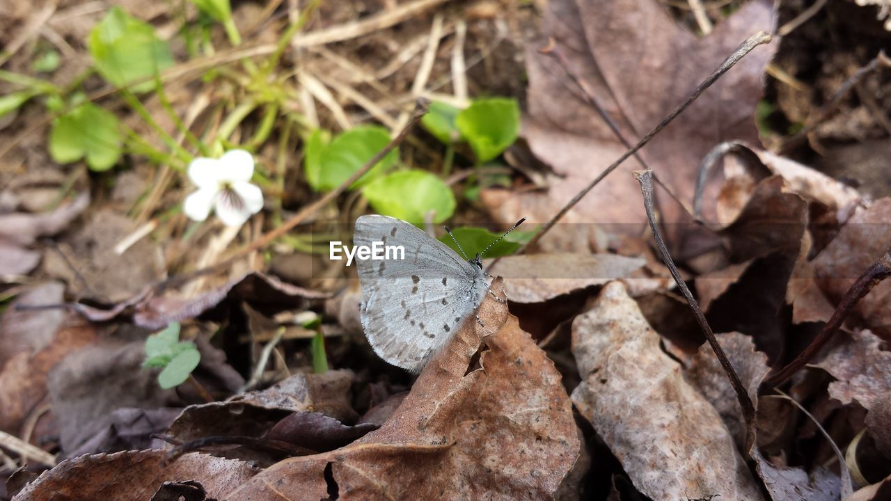 leaf, nature, plant, no people, day, butterfly - insect, outdoors, fragility, close-up, beauty in nature