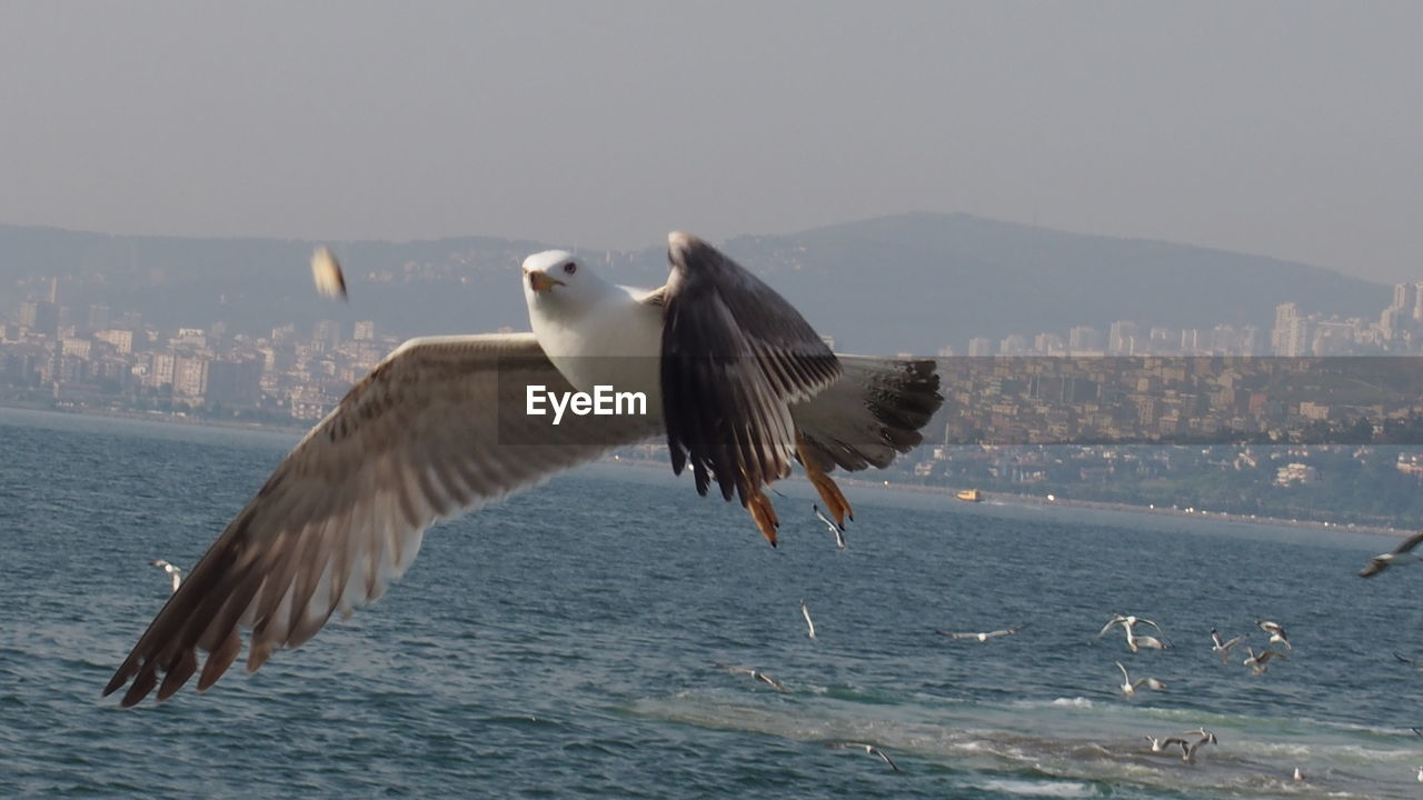 animal themes, animal wildlife, flying, bird, animals in the wild, vertebrate, animal, water, spread wings, sky, sea, one animal, nature, no people, mid-air, seagull, day, waterfront, motion, outdoors