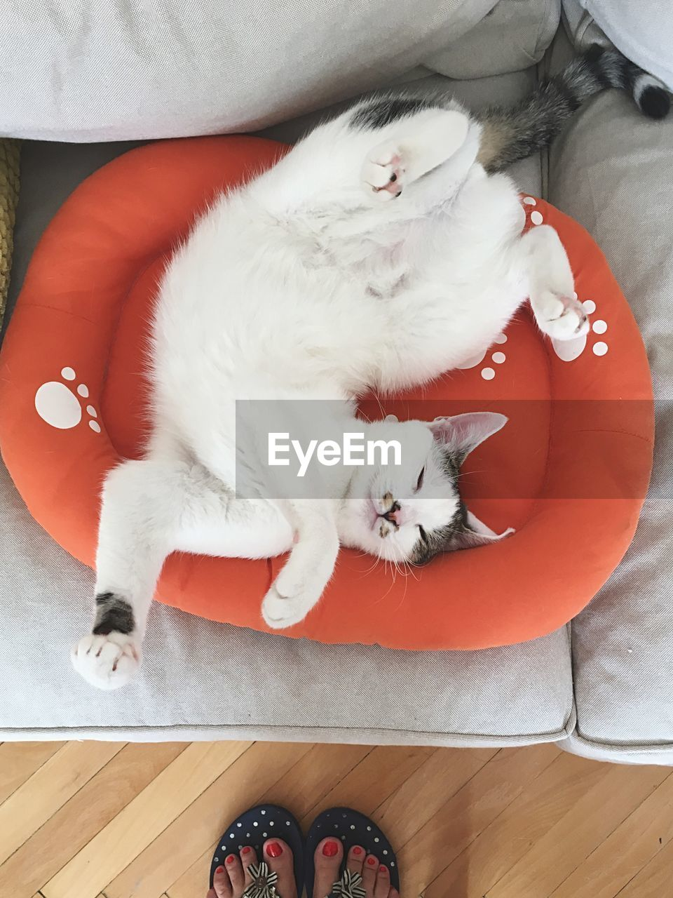 High Angle View Of Cat Resting On Pet Bed At Home
