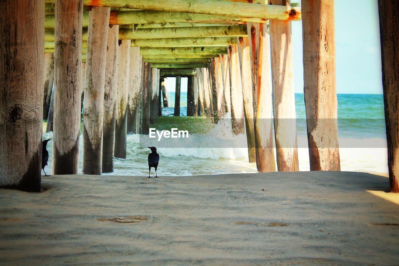 Birds on beach under wooden pier