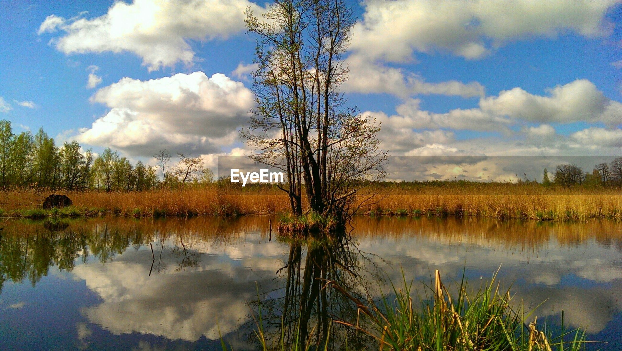 Trees reflecting on lake against cloudy sky