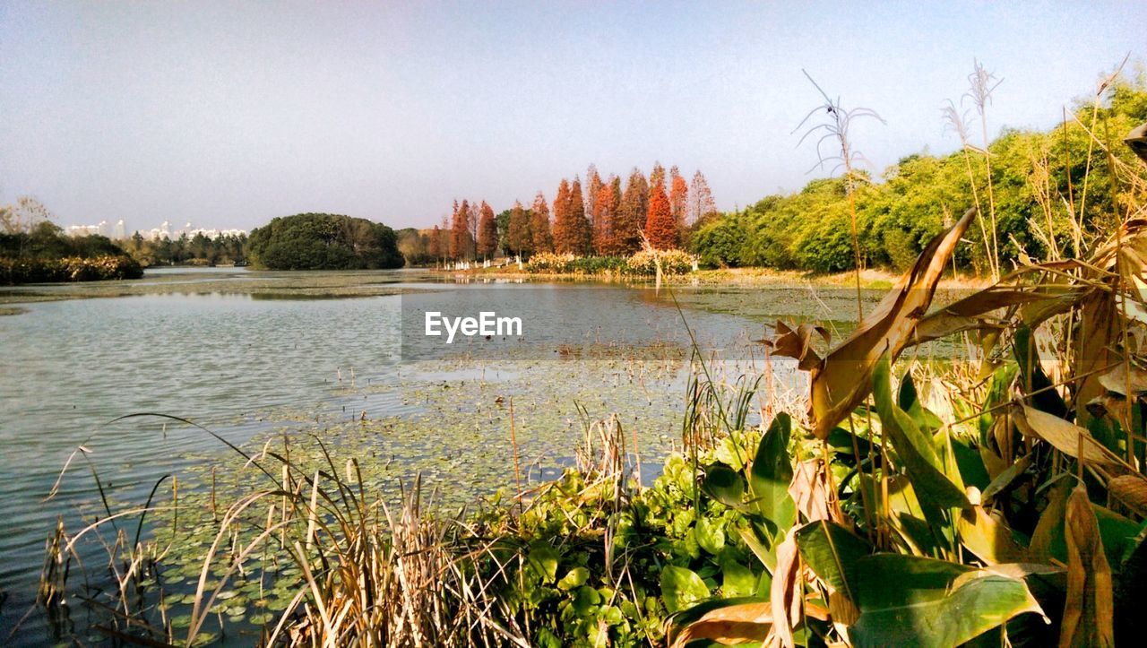 tree, nature, growth, lake, no people, outdoors, water, scenics, day, tranquility, tranquil scene, clear sky, plant, landscape, beauty in nature, sky, grass