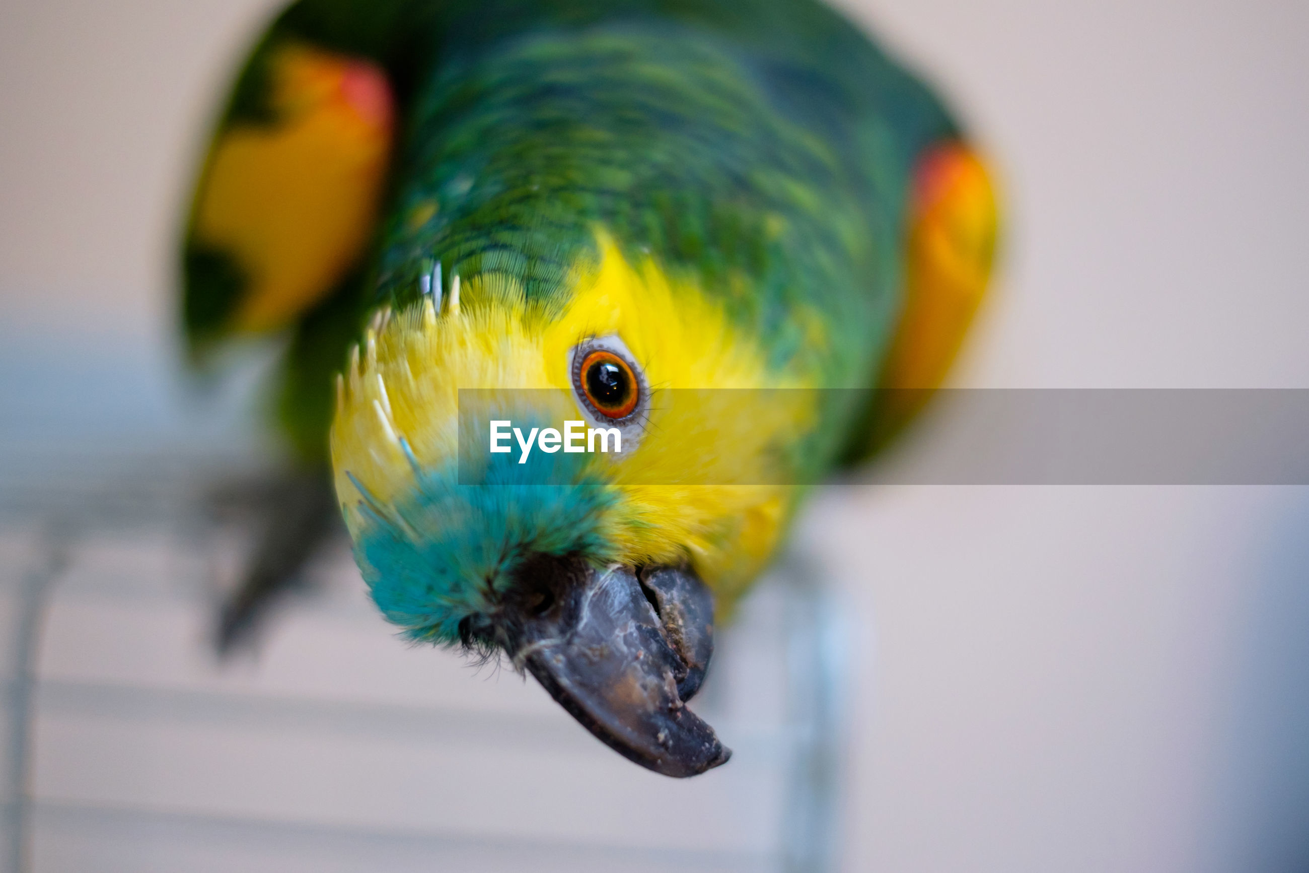 Close-up of parrot perching on cooling rack
