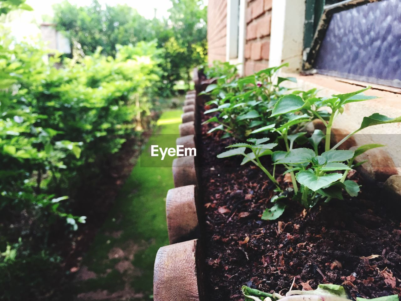growth, plant, nature, outdoors, building exterior, day, potted plant, green color, built structure, front or back yard, no people, leaf, architecture, close-up, freshness
