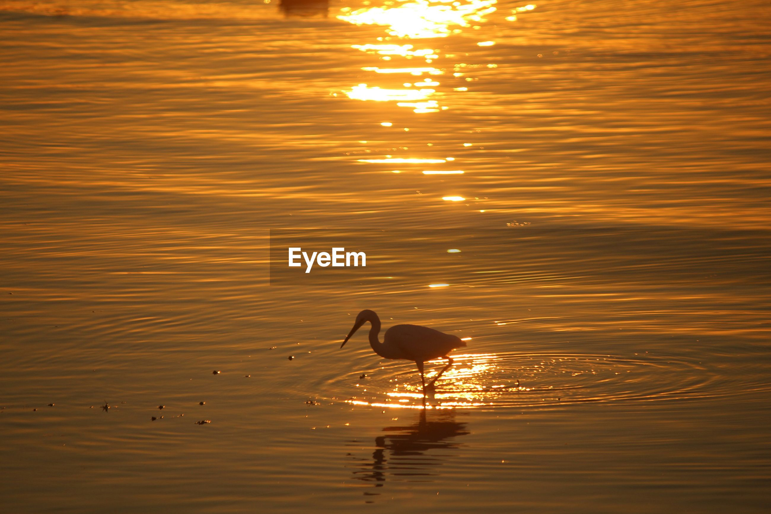 sunset, water, bird, animal themes, animals in the wild, wildlife, reflection, orange color, one animal, waterfront, rippled, lake, sun, silhouette, duck, sunlight, nature, beauty in nature, swimming, tranquility