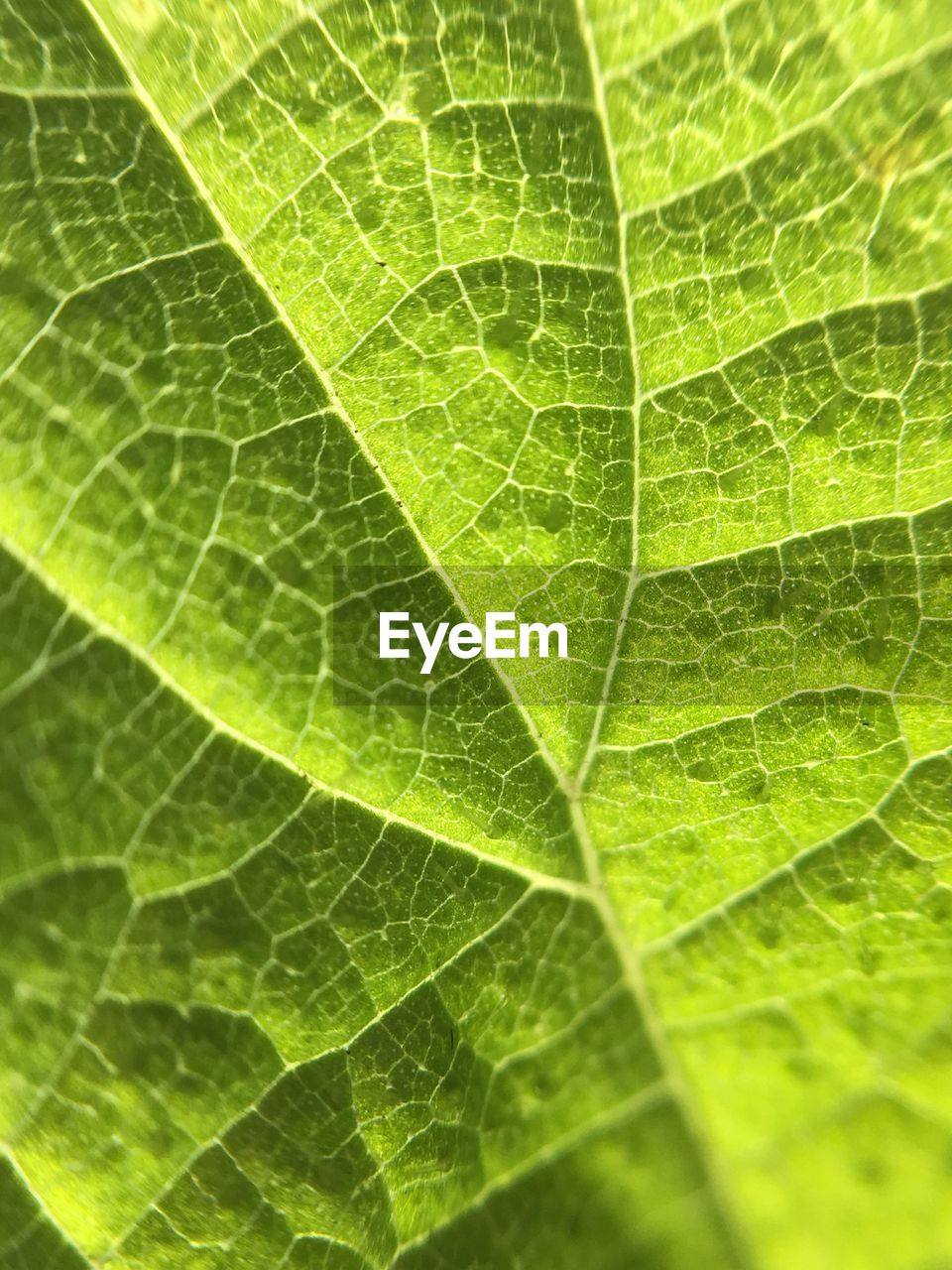 leaf, backgrounds, green color, full frame, close-up, nature, no people, day, growth, freshness, fragility, beauty in nature, outdoors