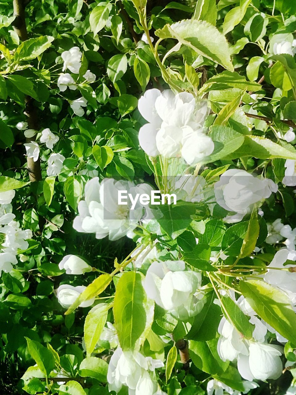 white color, flower, growth, nature, beauty in nature, plant, petal, blooming, green color, leaf, no people, day, fragility, freshness, outdoors, snowdrop, flower head, close-up