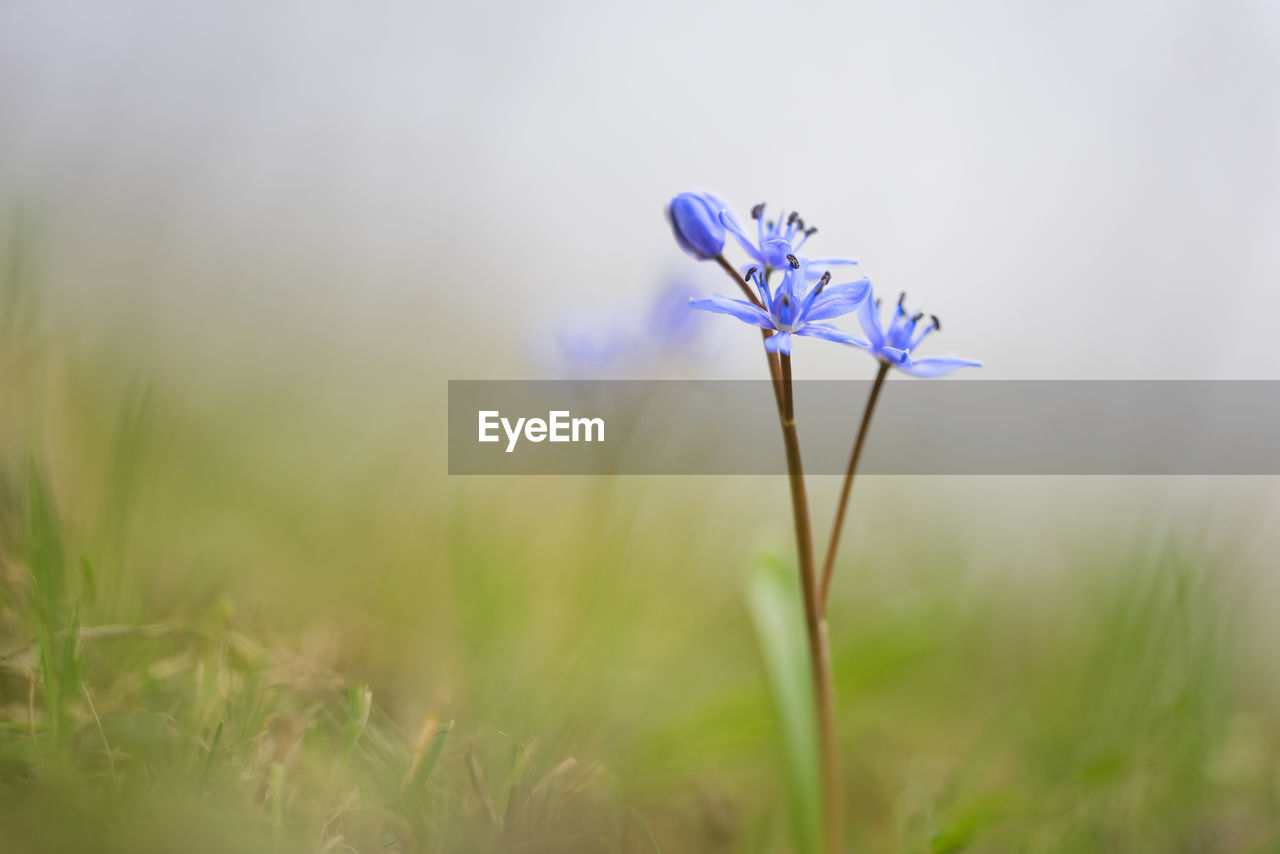 flowering plant, plant, flower, vulnerability, fragility, beauty in nature, growth, freshness, close-up, nature, selective focus, petal, purple, field, plant stem, land, inflorescence, flower head, no people, day, outdoors, crocus