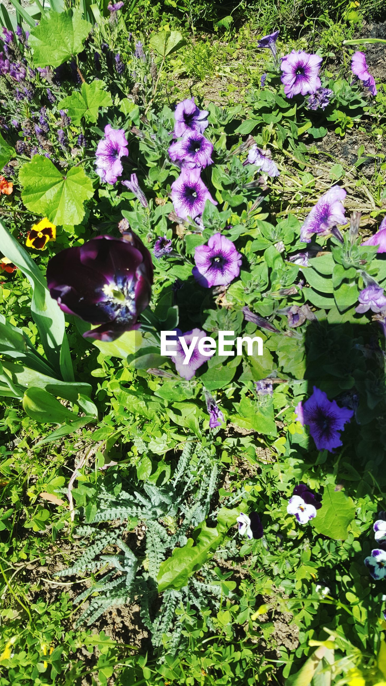 flower, growth, purple, freshness, plant, fragility, beauty in nature, nature, high angle view, green color, petal, blooming, leaf, field, flower head, in bloom, outdoors, day, no people, park - man made space