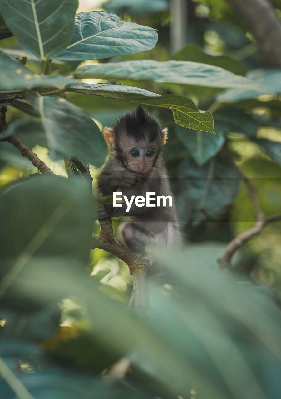 animal themes, animal, mammal, plant part, leaf, one animal, plant, vertebrate, portrait, animal wildlife, nature, looking at camera, no people, selective focus, animals in the wild, branch, day, primate, tree, young animal, outdoors, kitten