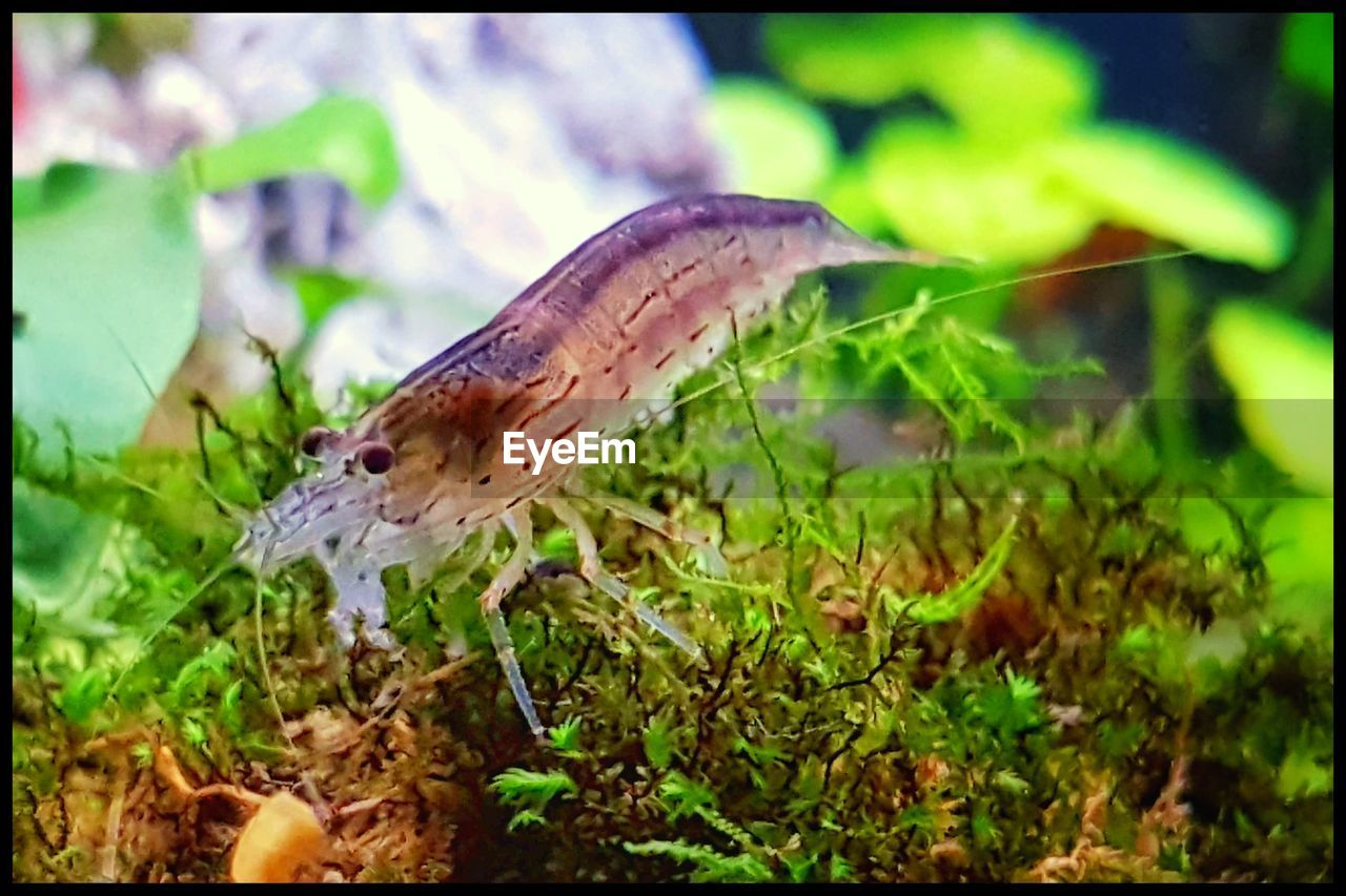 one animal, nature, close-up, insect, no people, animal themes, plant, animals in the wild, growth, focus on foreground, day, outdoors, leaf, fragility, beauty in nature, mushroom, freshness, grass, slug, full length