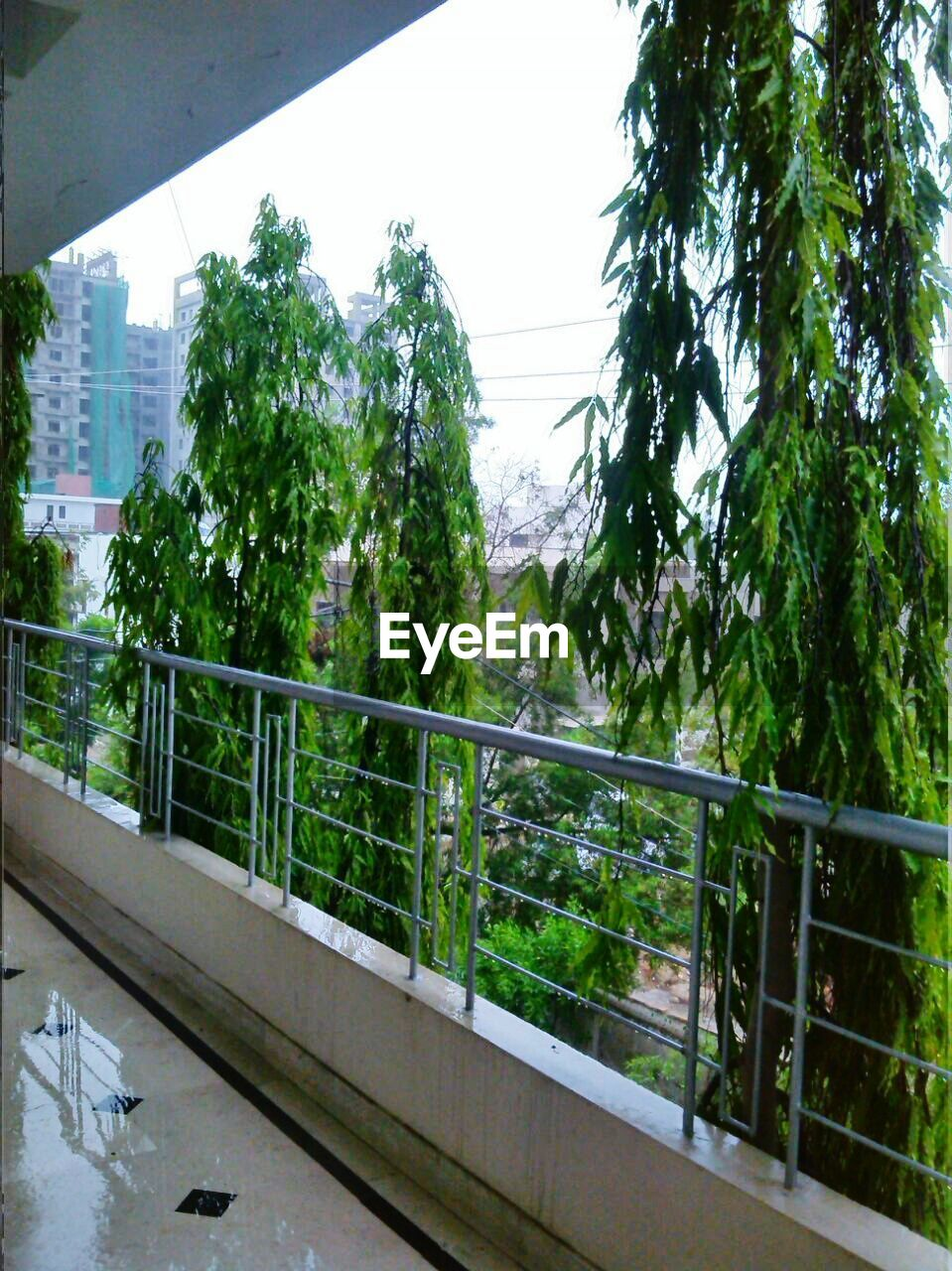 tree, railing, growth, day, no people, balcony, built structure, architecture, steps and staircases, bridge - man made structure, plant, nature, sky, outdoors, footbridge