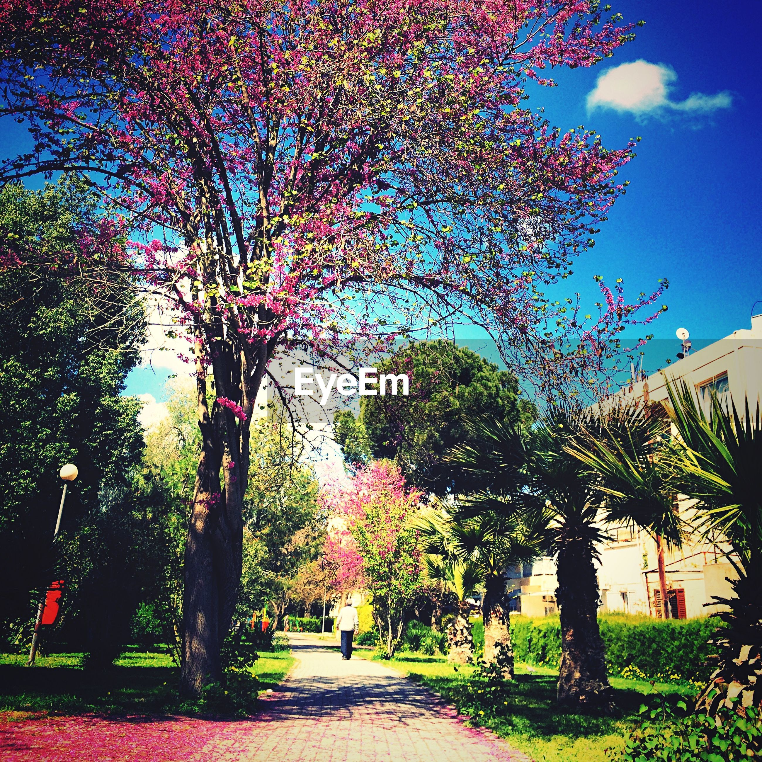 tree, growth, sky, branch, nature, beauty in nature, footpath, the way forward, park - man made space, flower, sunlight, tranquility, incidental people, treelined, outdoors, day, tranquil scene, autumn, road, street