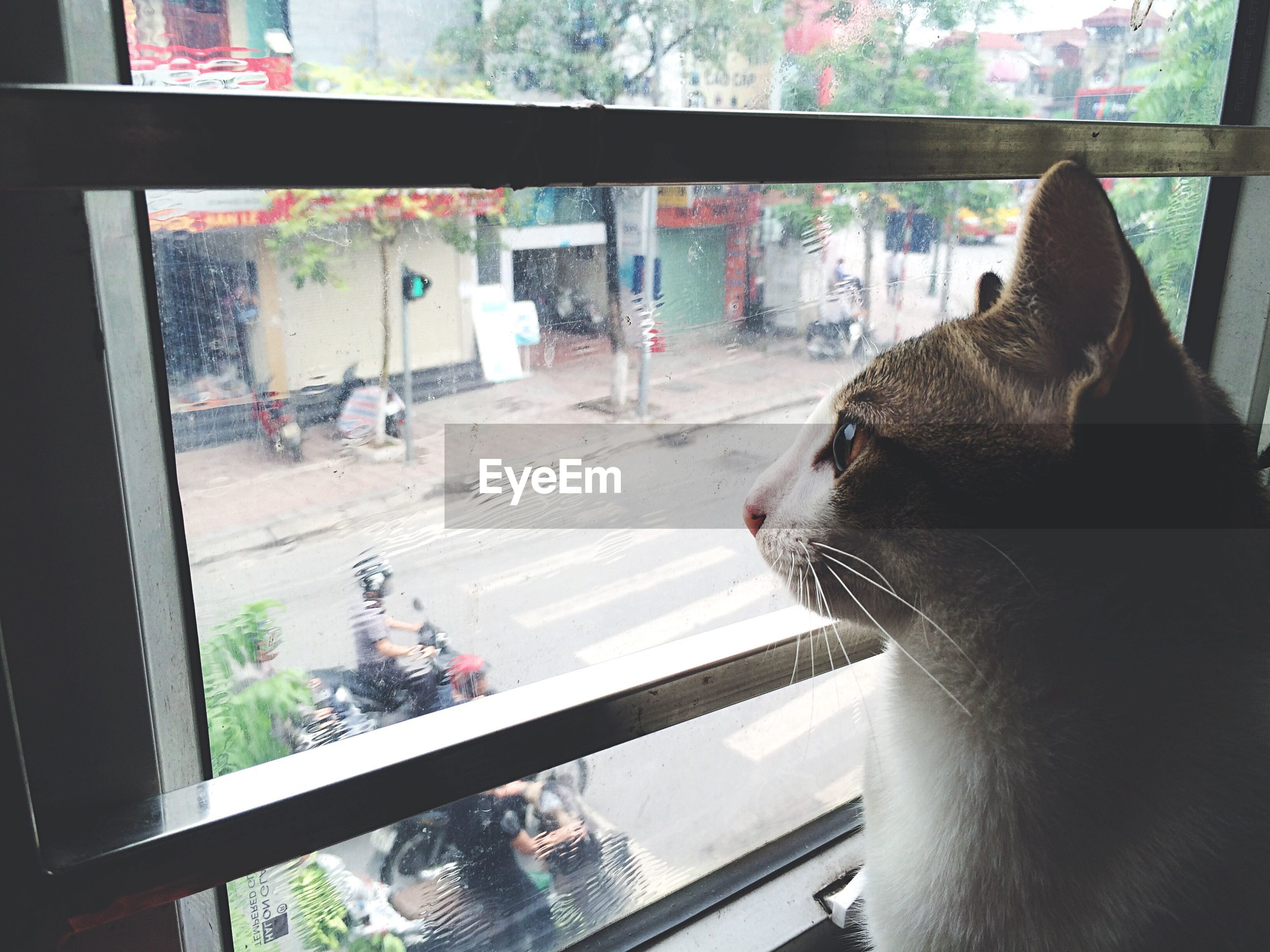pets, domestic animals, animal themes, one animal, mammal, indoors, window, domestic cat, cat, looking through window, glass - material, transparent, feline, architecture, relaxation, built structure, close-up, no people, transfer print, day