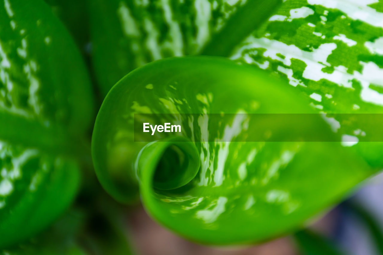 green color, food and drink, food, close-up, vegetable, healthy eating, wellbeing, no people, freshness, full frame, focus on foreground, plant, nature, still life, raw food, high angle view, growth, day, pattern, selective focus