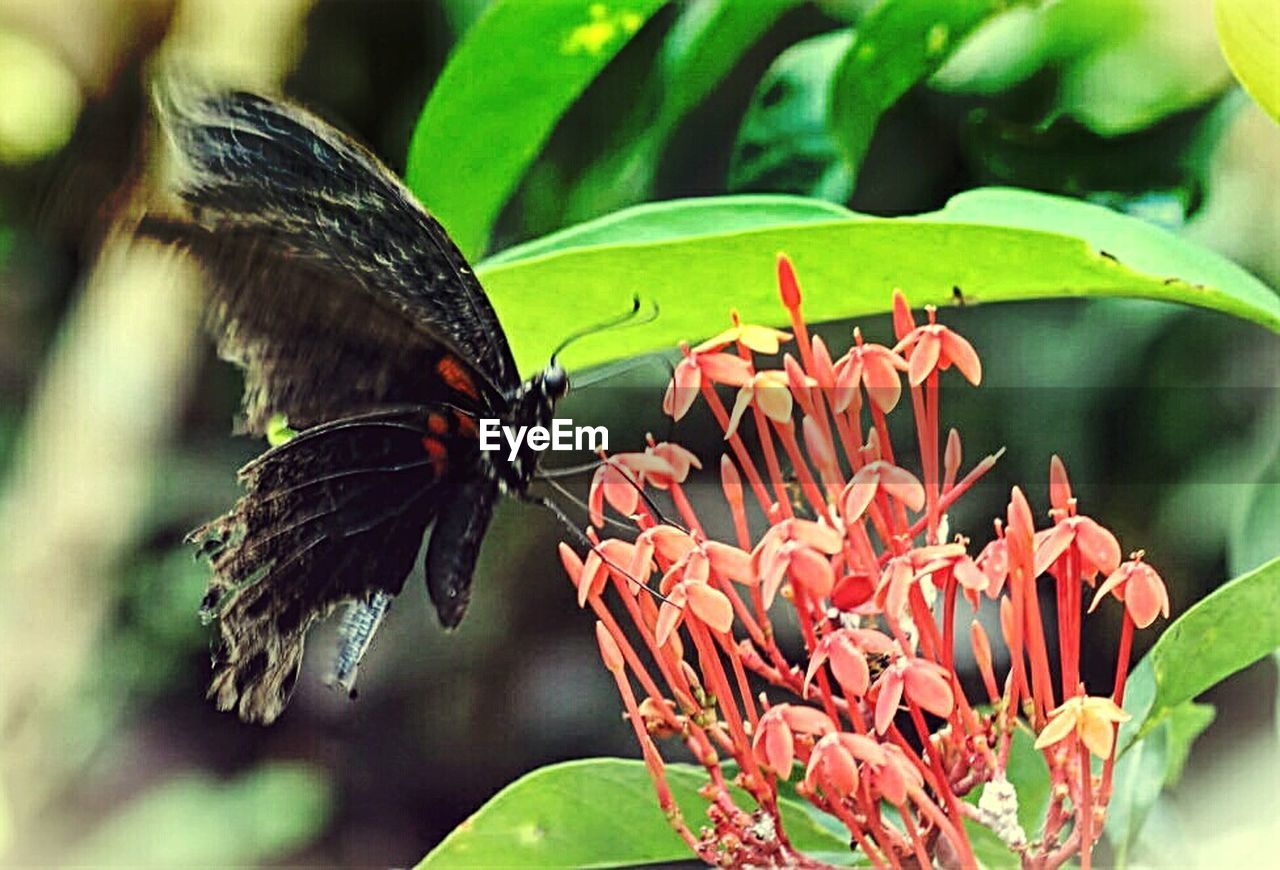 insect, flower, butterfly - insect, animals in the wild, animal themes, one animal, plant, beauty in nature, nature, animal wildlife, fragility, growth, leaf, freshness, petal, close-up, no people, flower head, outdoors, red, pollination, day, perching, zinnia