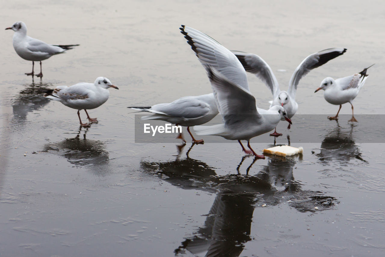 animals in the wild, group of animals, bird, animal wildlife, animal, animal themes, vertebrate, water, seagull, no people, day, lake, nature, large group of animals, flying, beach, beauty in nature, spread wings, land, flock of birds