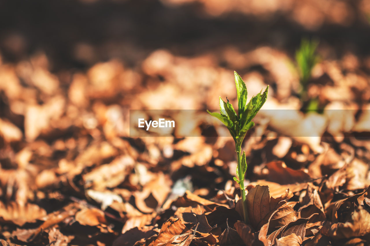 growth, leaf, plant part, plant, nature, close-up, no people, selective focus, field, beauty in nature, day, land, beginnings, focus on foreground, outdoors, sunlight, green color, freshness, vulnerability, seedling, leaves