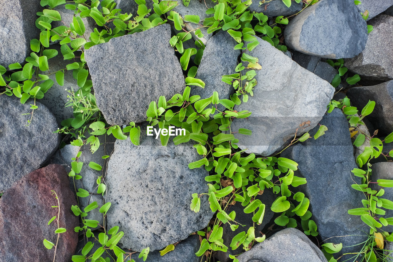 rock - object, no people, high angle view, leaf, green color, plant, outdoors, day, freshness, food, nature, close-up