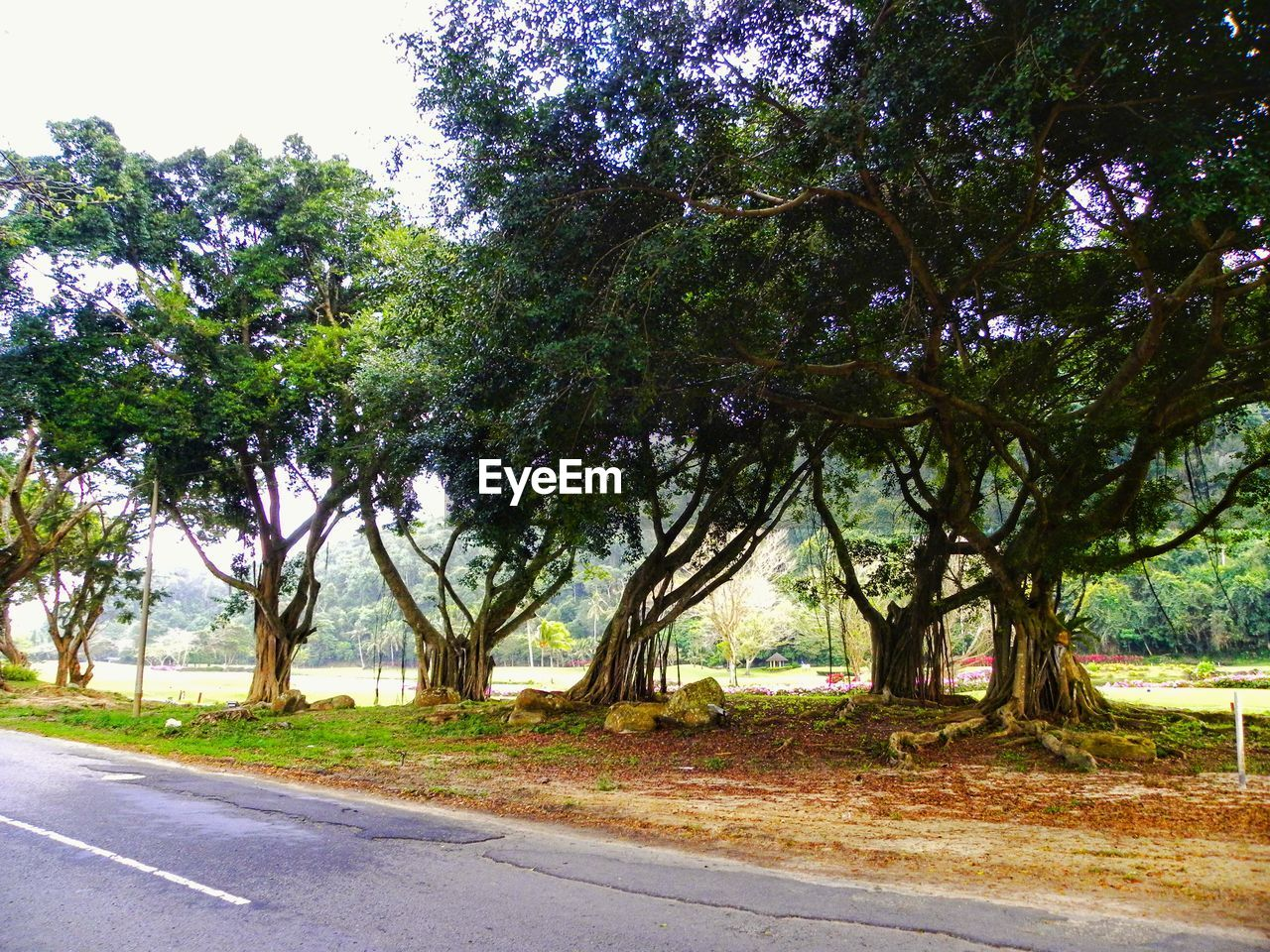 tree, road, growth, nature, outdoors, no people, day