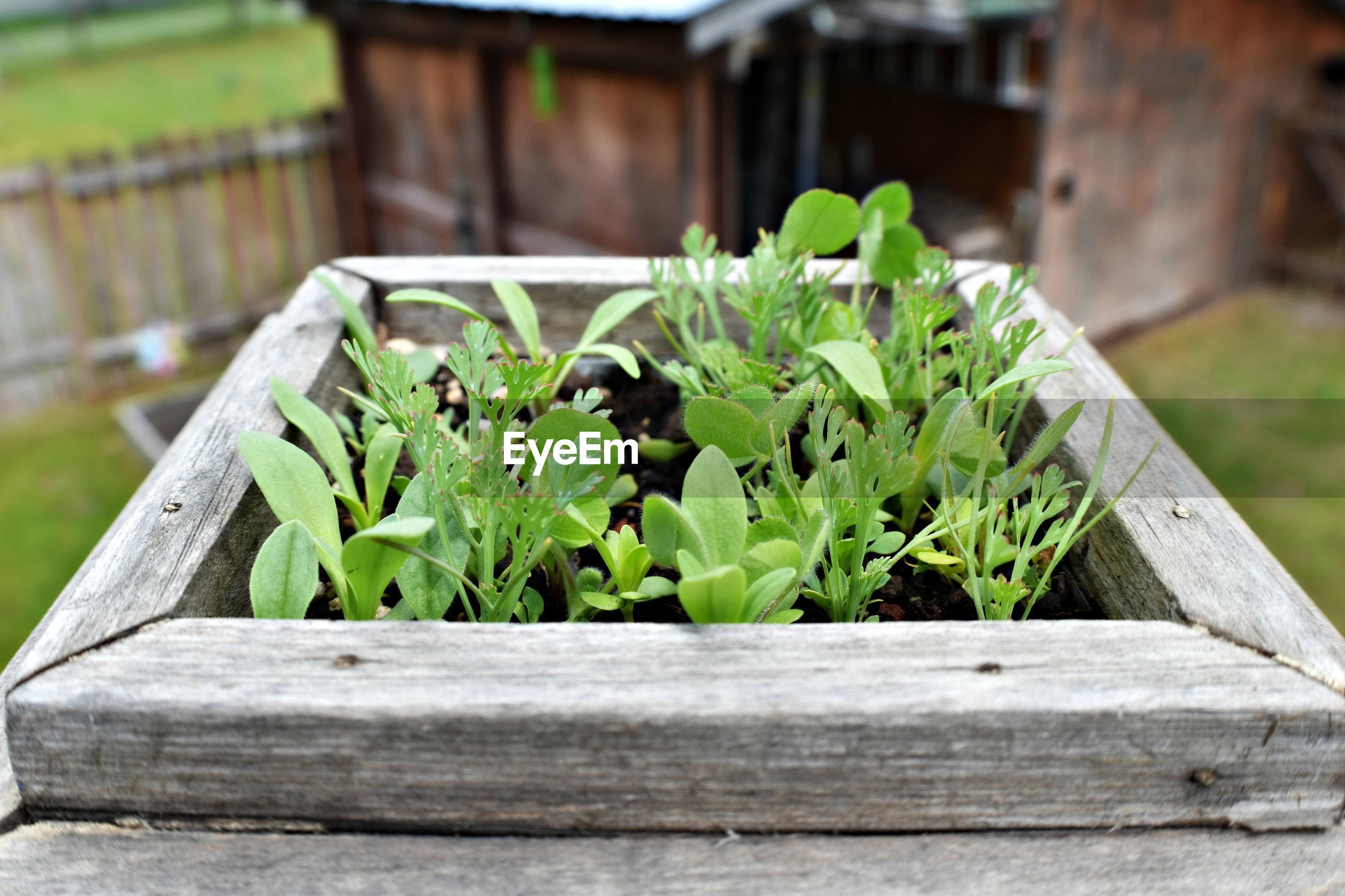 Close-up of fresh green plants in yard