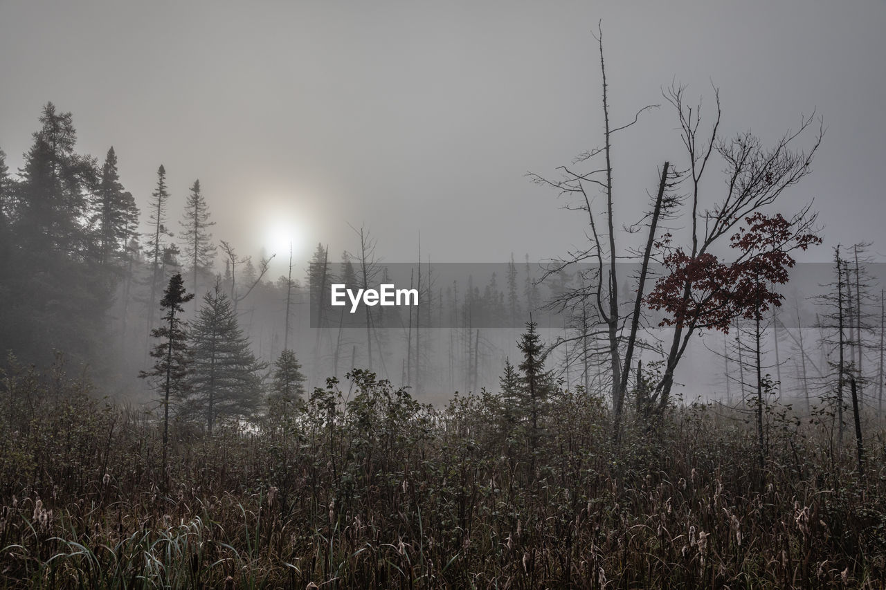 Trees growing on field against sky during foggy weather