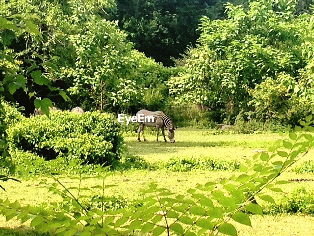 green color, animal themes, one animal, mammal, tree, grass, nature, plant, day, grazing, animals in the wild, no people, outdoors, growth, field, landscape, animal wildlife, leaf, full length, domestic animals, beauty in nature