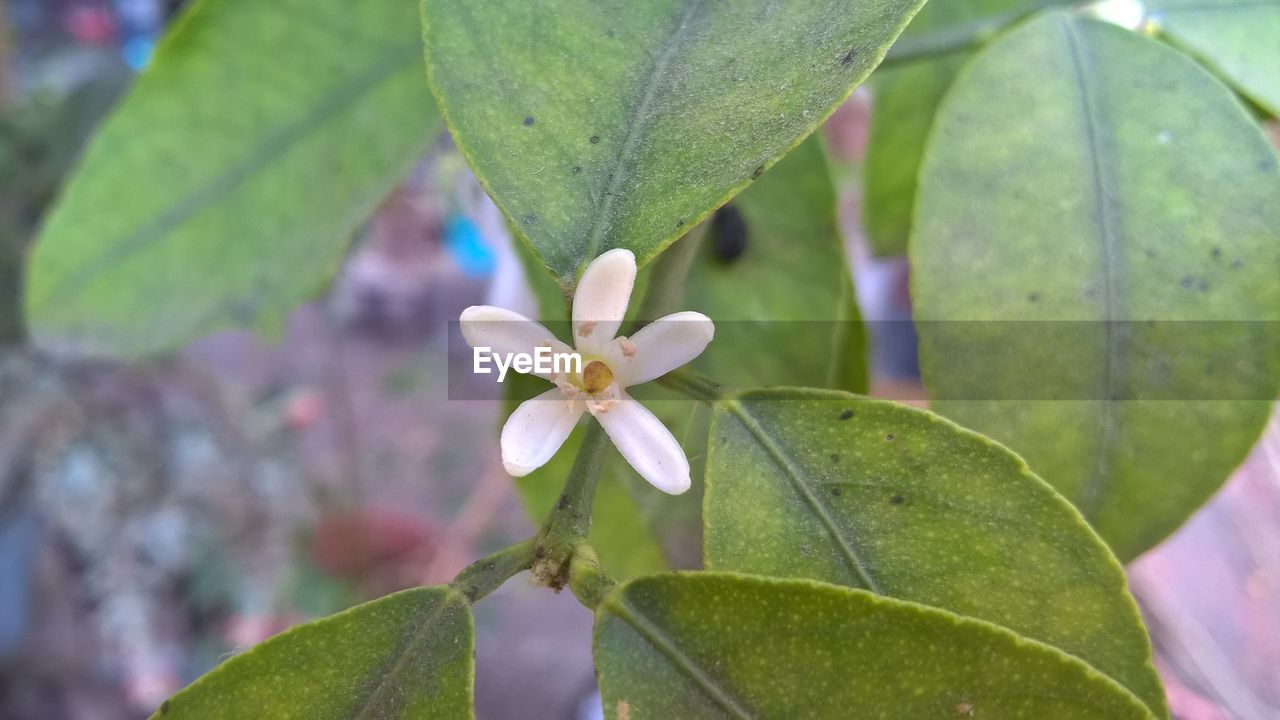 leaf, growth, nature, fragility, beauty in nature, petal, close-up, plant, day, flower, flower head, no people, green color, outdoors, freshness, periwinkle