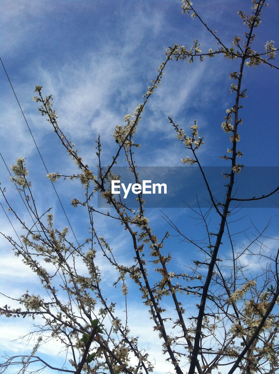 sky, nature, low angle view, no people, growth, day, beauty in nature, branch, outdoors, blue, tree, plant, cloud - sky, flower