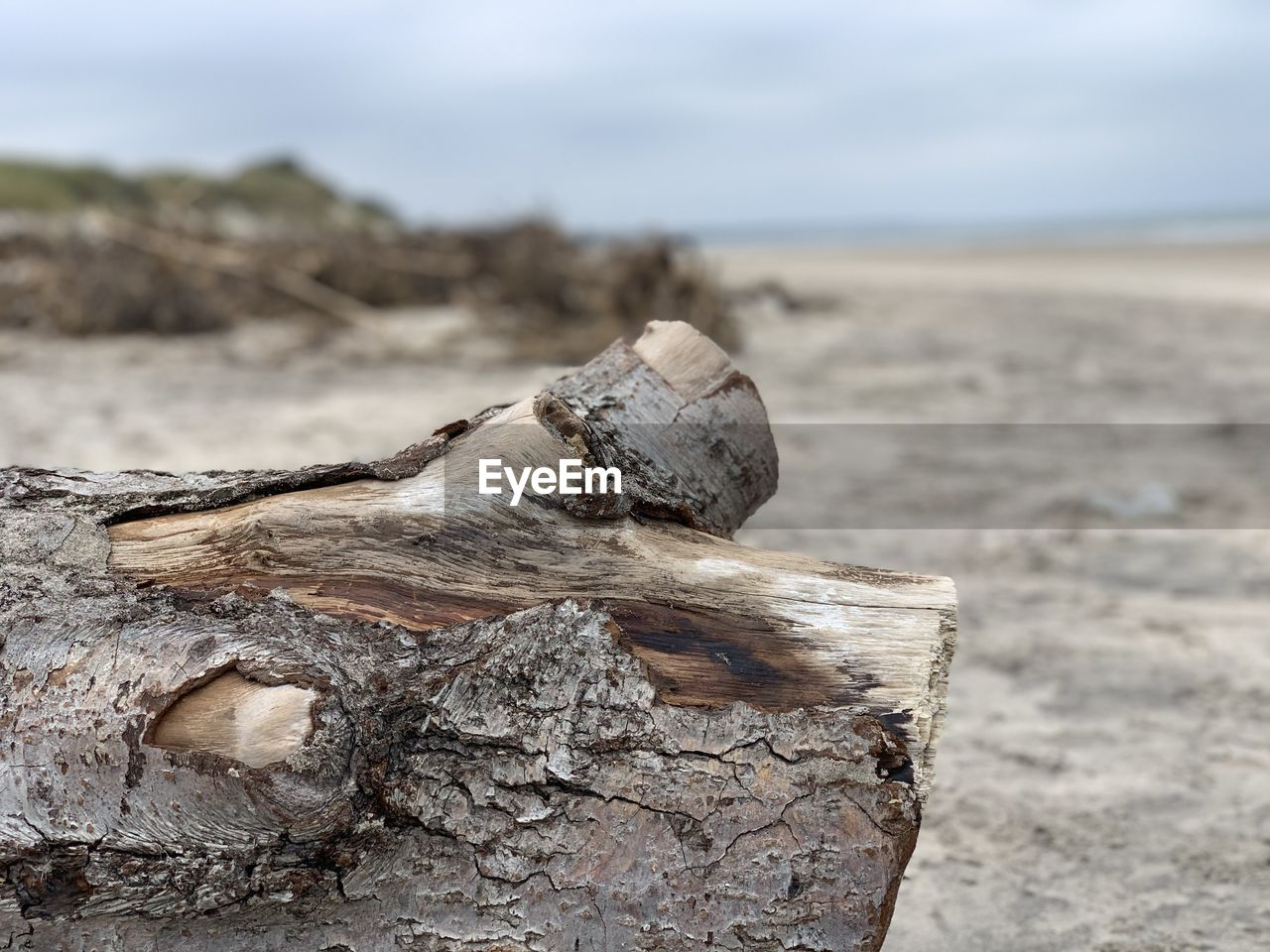 wood - material, land, focus on foreground, wood, nature, tree, close-up, log, beach, timber, no people, day, outdoors, sand, sky, driftwood, textured, tranquility, deforestation, selective focus, bark