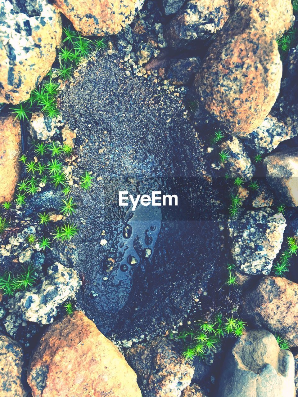rock - object, nature, day, no people, outdoors, high angle view, lichen, moss, textured, pebble, beauty in nature, close-up