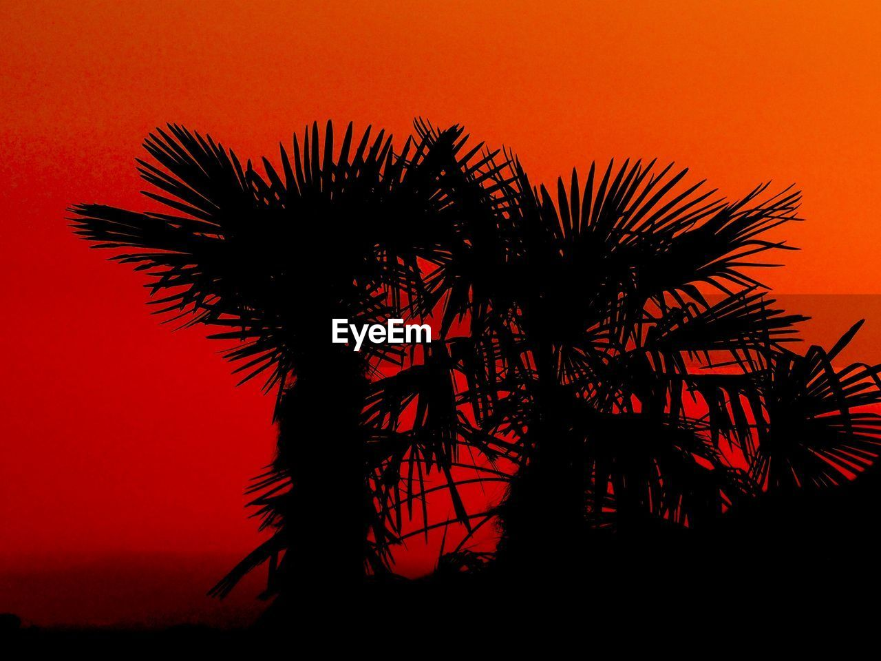 sunset, palm tree, silhouette, beauty in nature, orange color, sky, nature, low angle view, tree, no people, outdoors, growth, scenics, clear sky, close-up, day