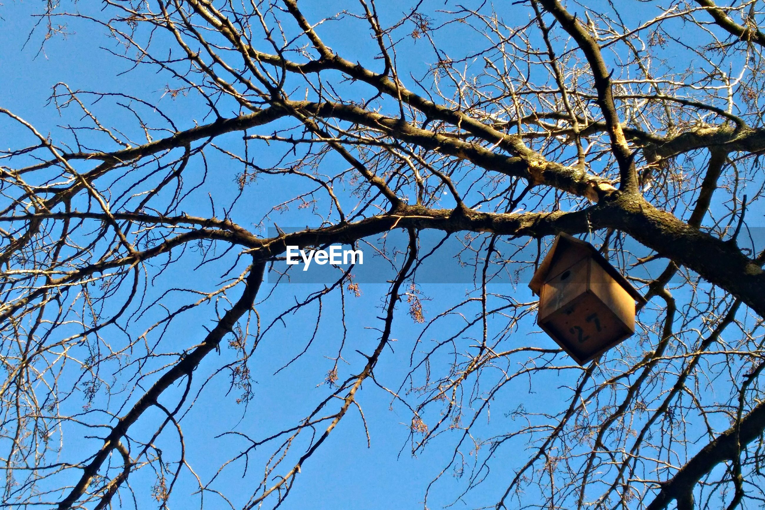 Low angle view of birdhouse hanging on bare tree