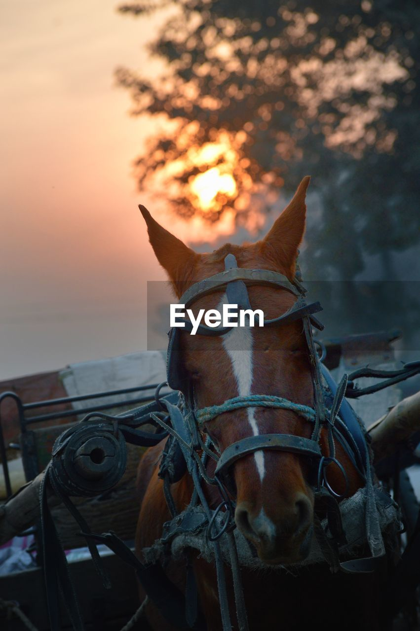 CLOSE-UP OF HORSE AGAINST SUNSET SKY
