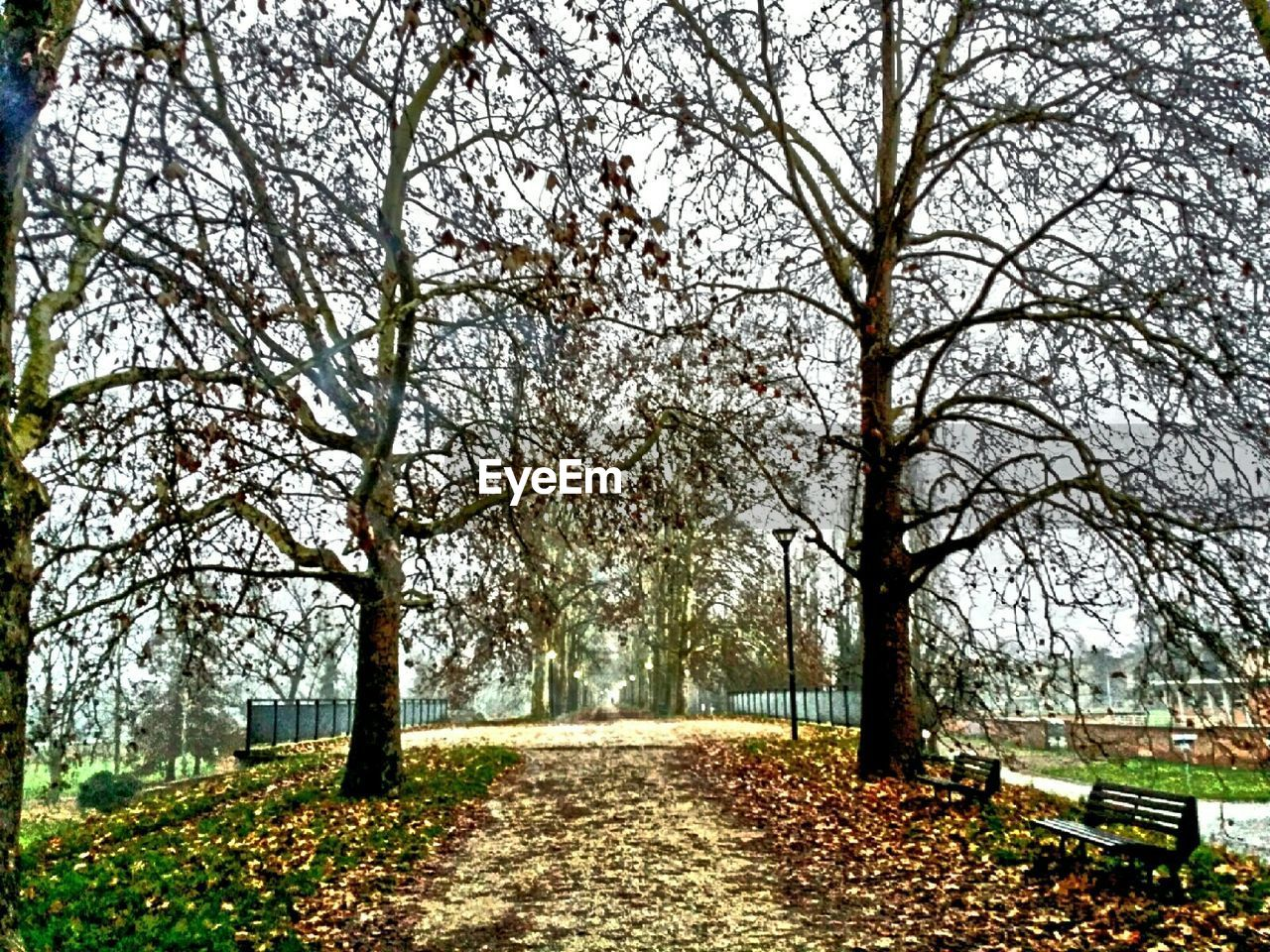 tree, nature, scenics, tranquility, beauty in nature, no people, tranquil scene, branch, day, transportation, outdoors, autumn, landscape, the way forward, growth, sky, flower, freshness