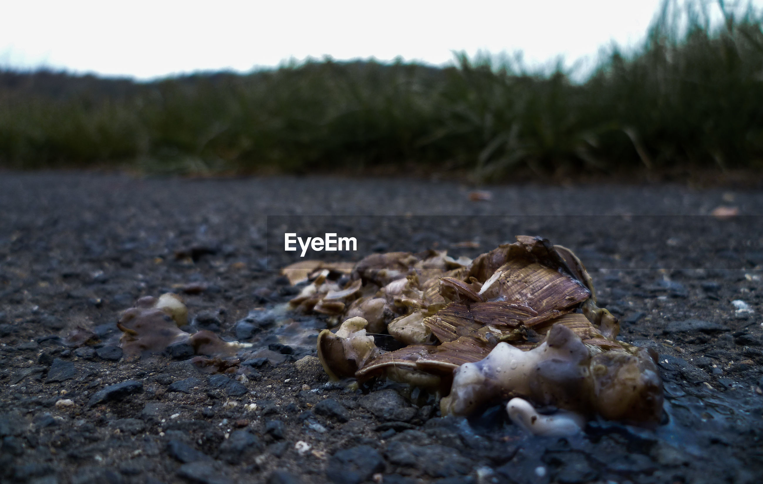 Close-up of dead snail on ground