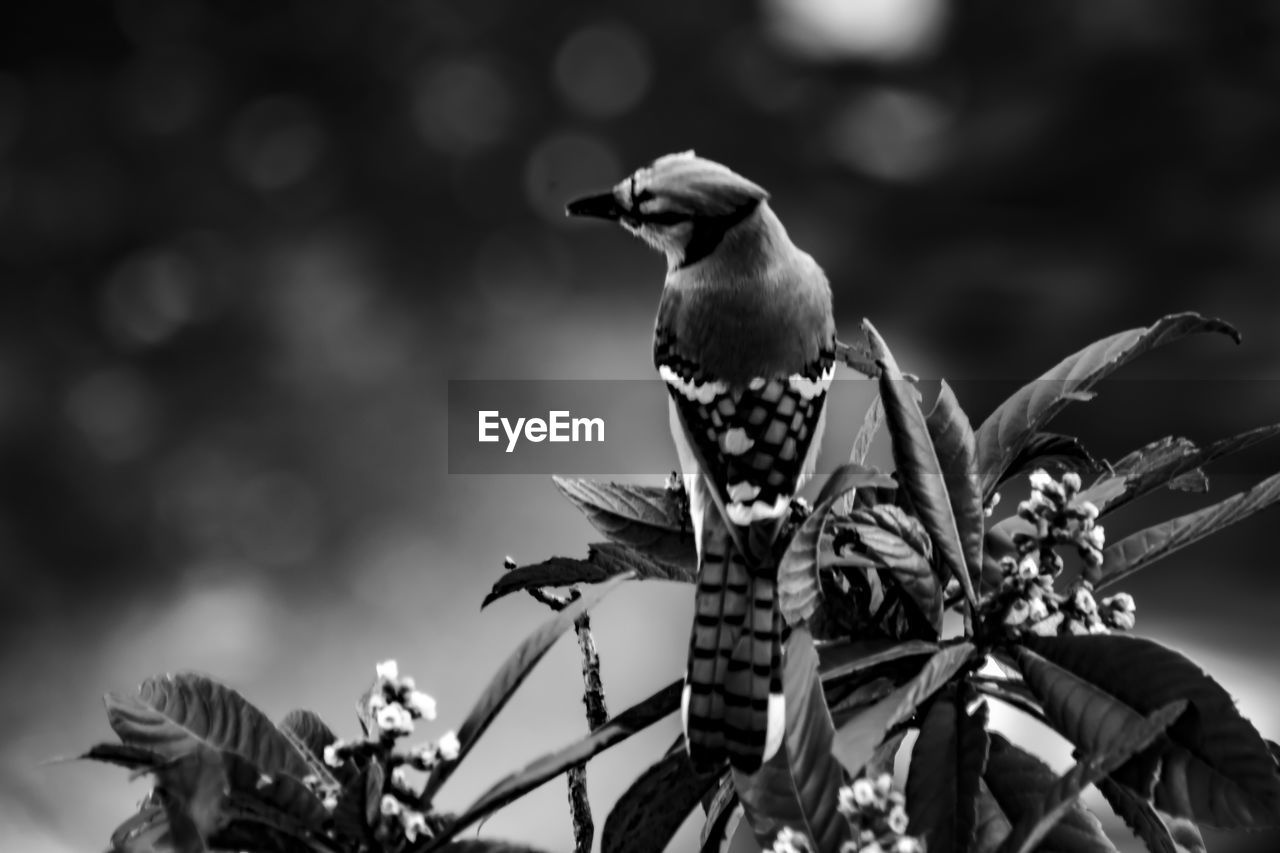 animal themes, bird, animals in the wild, one animal, animal wildlife, nature, perching, outdoors, focus on foreground, no people, day, low angle view, plant, growth, beauty in nature, branch, flower, tree, close-up, sky