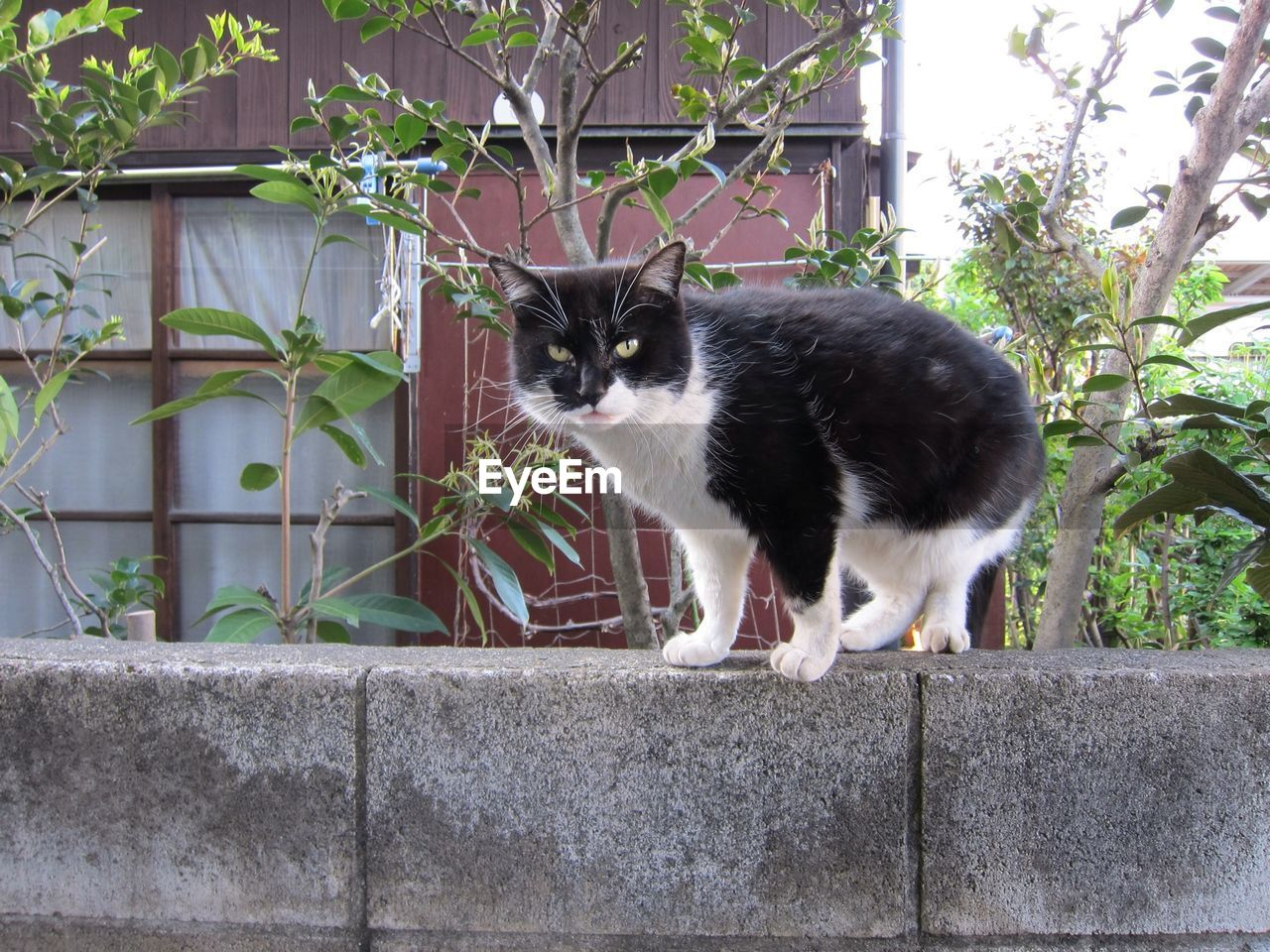 A domestic cat on a cement wall