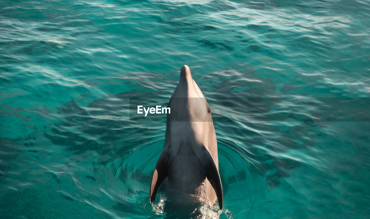 animal, animal themes, animal wildlife, water, animals in the wild, sea, underwater, one animal, vertebrate, mammal, swimming, aquatic mammal, nature, day, no people, dolphin, fish, sea life, waterfront, marine, outdoors, turquoise colored, animal head, animal mouth