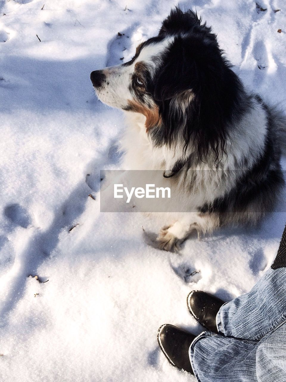 Low section of man with dog in snow