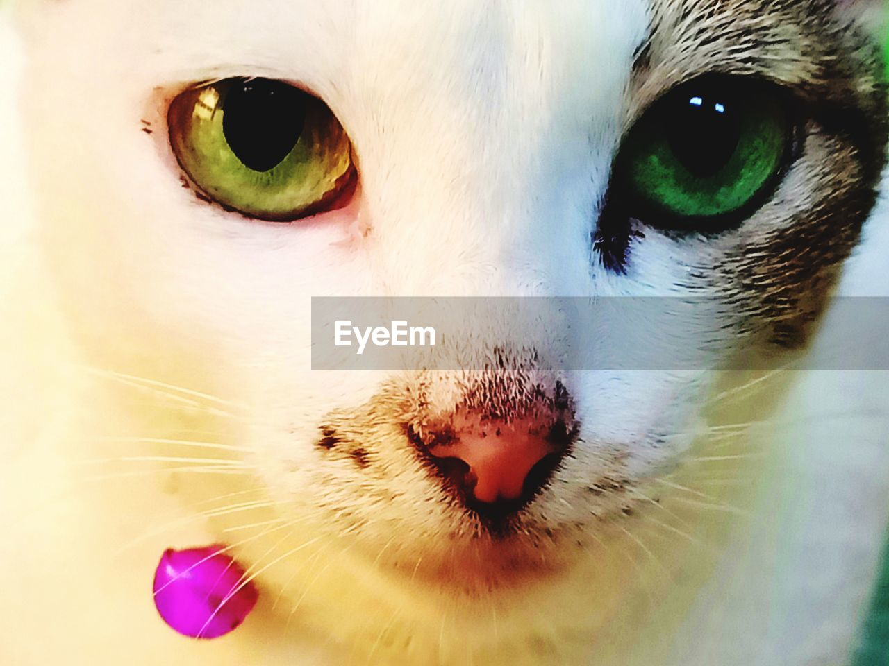 pets, domestic, domestic animals, mammal, cat, one animal, domestic cat, animal themes, feline, animal, close-up, vertebrate, animal body part, no people, whisker, eye, indoors, looking at camera, portrait, animal eye, animal head, animal nose, animal mouth, snout