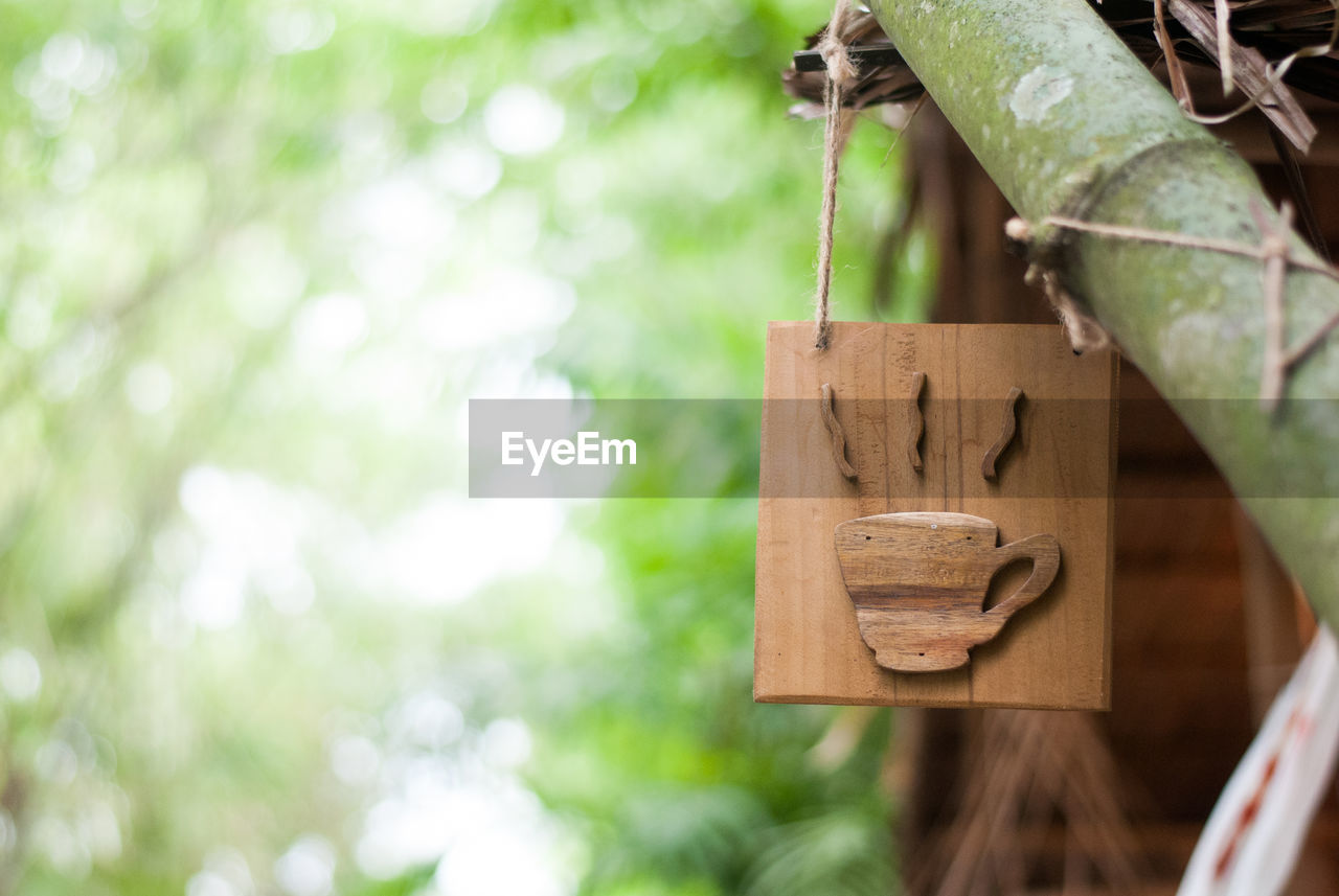 focus on foreground, plant, wood - material, day, hanging, no people, tree, close-up, nature, green color, outdoors, growth, creativity, leaf, art and craft, plant part, selective focus, craft, heart shape