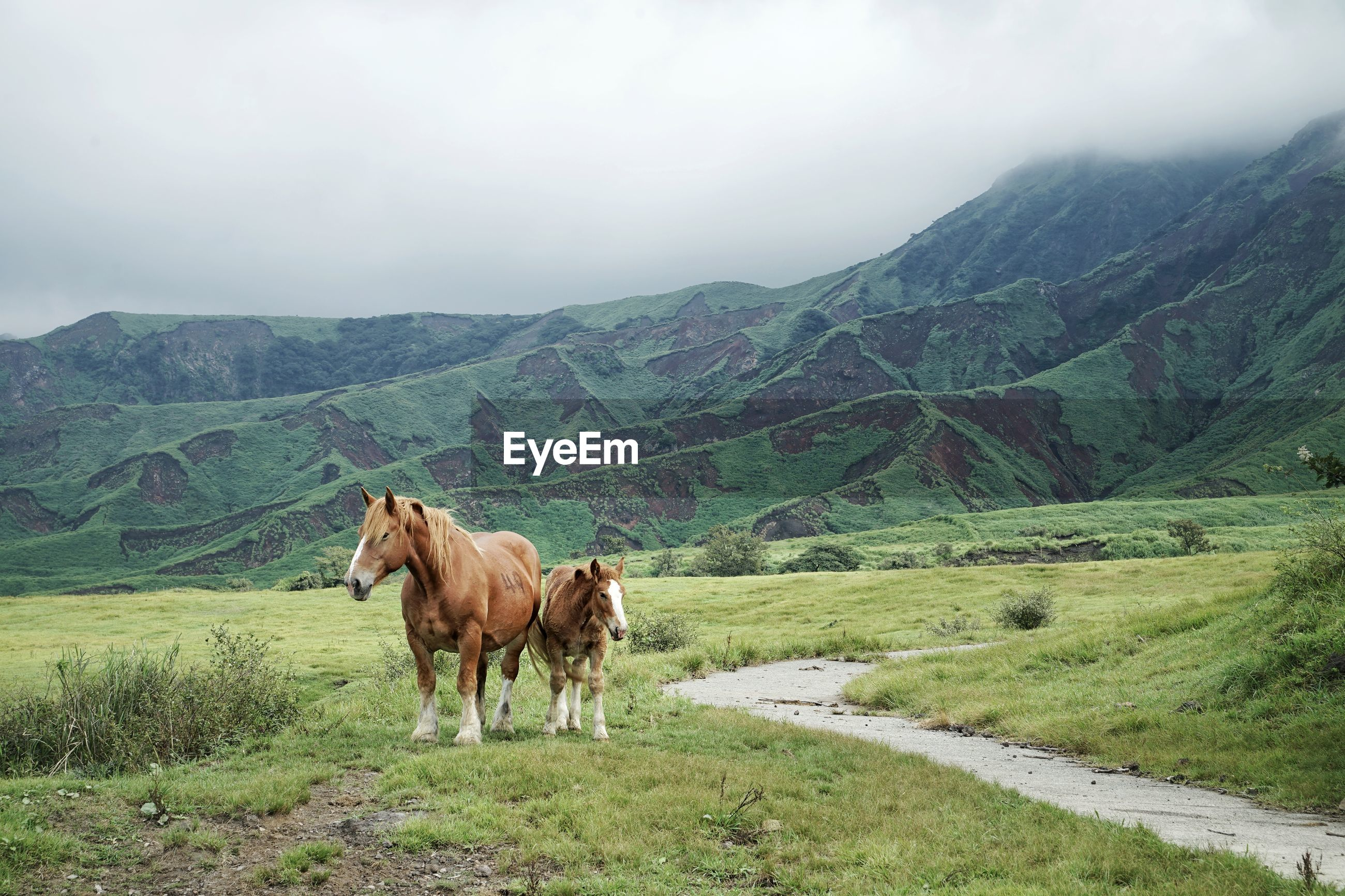 Horses in mount aso