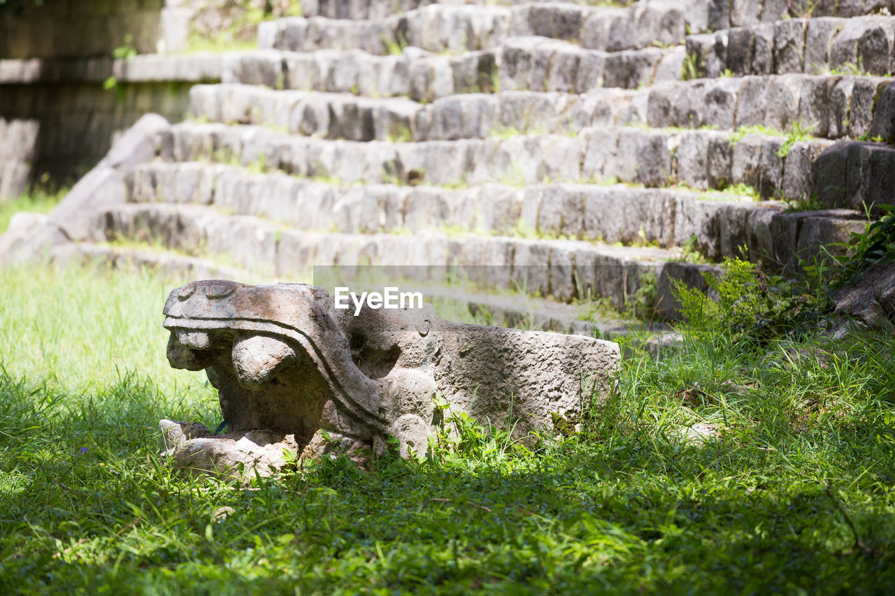 grass, plant, no people, day, nature, field, animal, animal themes, history, land, the past, architecture, one animal, solid, mammal, green color, focus on foreground, vertebrate, animals in the wild, animal wildlife, stone wall, ancient civilization