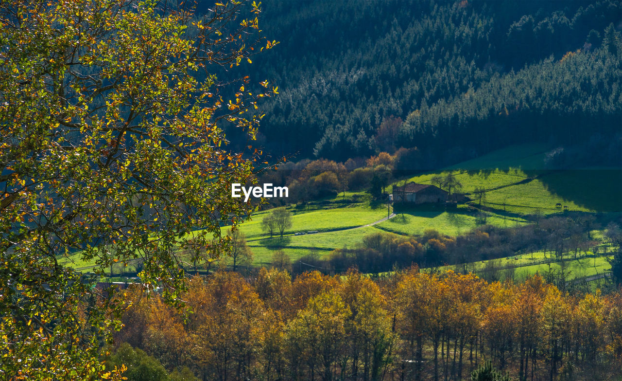 plant, tree, beauty in nature, growth, tranquility, scenics - nature, autumn, tranquil scene, nature, no people, landscape, land, change, environment, day, outdoors, field, non-urban scene, forest, sky