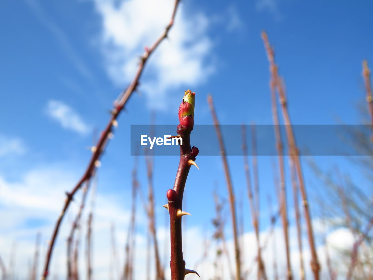 Low angle view of plant stem against sky